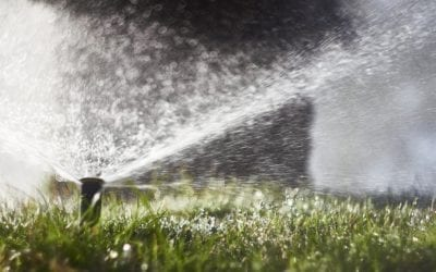 Water Conservation This Summer and All Year Long for Businesses and Properties